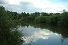 Stub Pond Fishery