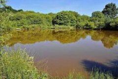 Alverstone Ponds