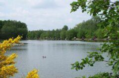 Gold Valley Lakes - Syndicate Lake