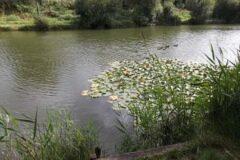Gunville Pond