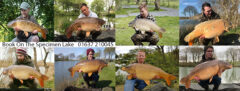 Gwinear Angling's Specimen and Match Pleasure Lake