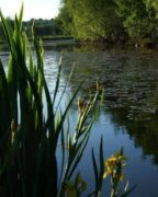 Haslams lake