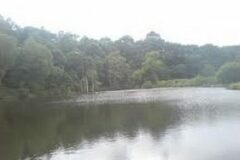 Knitsley Mill Trout Fishery, Nr. Consett