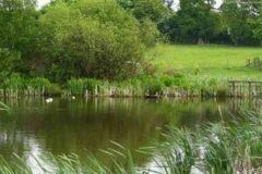 Manley Springs