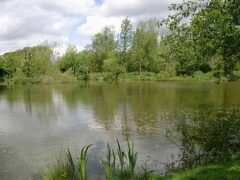 Three Counties Fisheries
