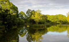 Wylands Angling Centre