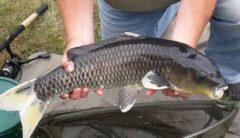 Red House Farm Fishing Holidays