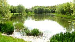 Stanwick Lakes Fisheries