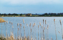 Willowcroft Fisheries & Holiday Parks